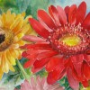Two Gerber Daisies