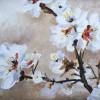 Almond Blossom II