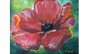 Poppy Flower in Bloom